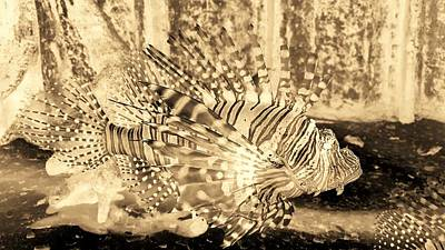 Photograph - Lion Fish Sepia Negative by Rob Hans