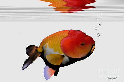 Lion-head Goldfish Art Print by Corey Ford
