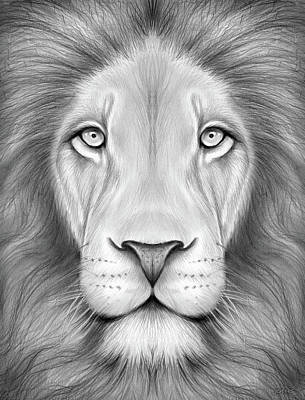 Animals Drawings - Lion Head by Greg Joens