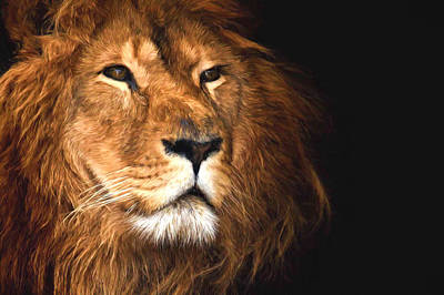 Photograph - Lion Head Oil Painting by John Williams