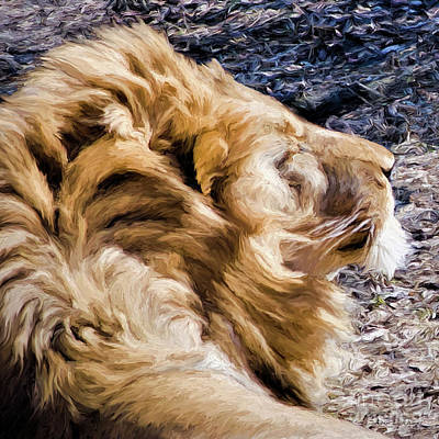 Painting - Lion In A Warm Breeze by Adam Olsen