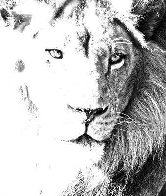 Photograph - Lion In Black And White by Paul Riedinger