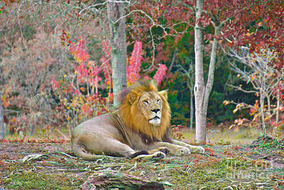 Painting - Lion In Color Edition 2 by Judy Kay