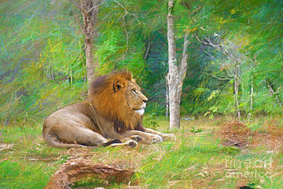 Painting -  Lion In The Grass by Judy Kay