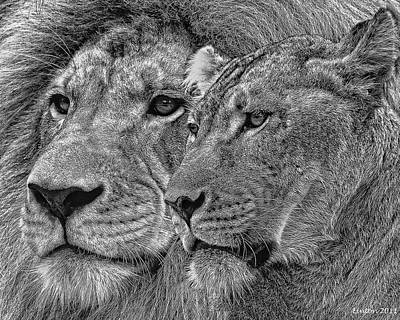 Lion King And Queen Art Print by Larry Linton