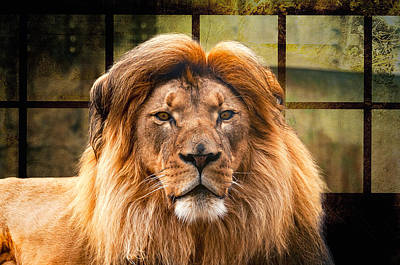 Photograph - Lion King by Maria Coulson