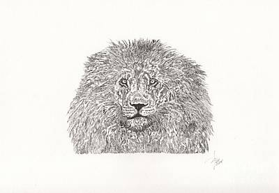 Animals Drawings - Lion King by Pedro Brito Soares