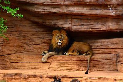 Photograph - Lion by Lisa Wooten