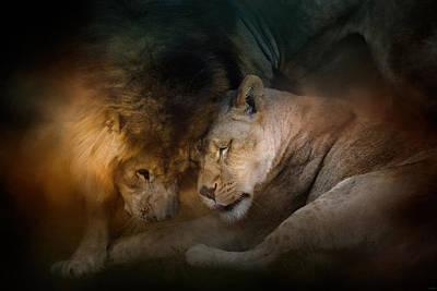 Photograph - Lion Love by Jai Johnson