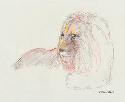Drawing - Lion by Marilyn Hilliard