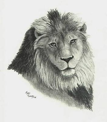 Drawing - Lion by Mary Rogers