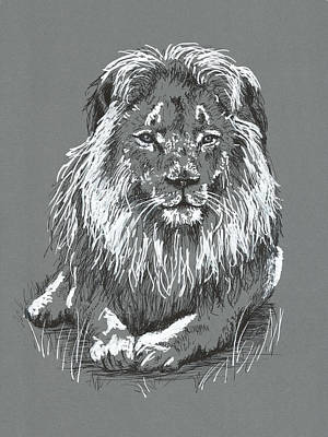 Drawing - Lion by Masha Batkova