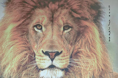 Photograph - Lion Of Judah  by Dennis Baswell