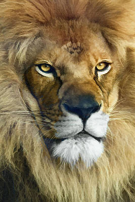 Photograph - Lion Of Judah II by Sharon Foster