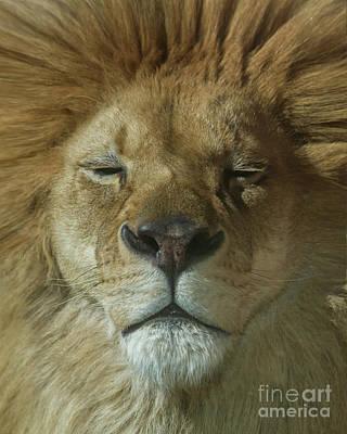 Photograph - Lion Of Judah by Karen Jorstad