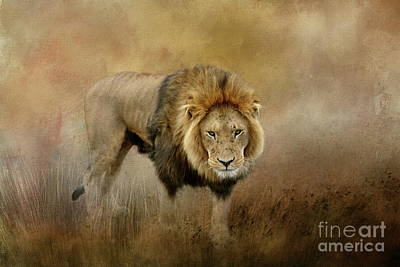 Photograph - Lion On The Prowl by Myrna Bradshaw