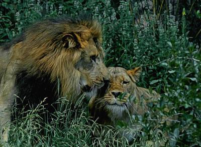 Male Lion Digital Art - Lion Pair by Ernie Echols
