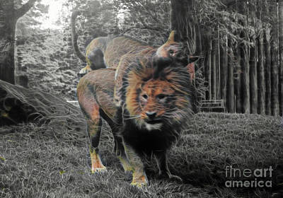 Photograph - Lion Play by Patti Whitten