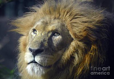 Art Print featuring the photograph Lion Portrait by Savannah Gibbs