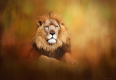 Lion - Pride Of Africa I - Tribute To Cecil Art Print