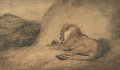 Drawing - Lion Resting by Antoine-Louis Barye