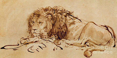 Pen Drawing - Lion Resting by Rembrandt