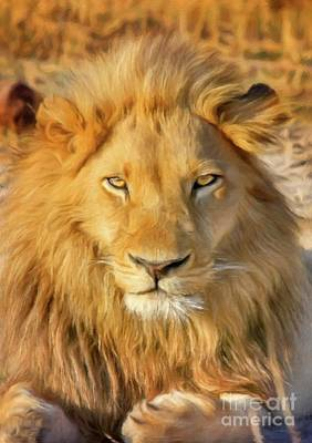 Mammals Royalty-Free and Rights-Managed Images - Lion by Sarah Kirk