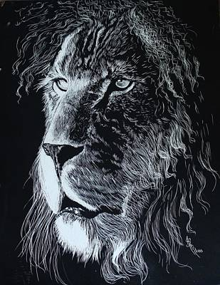 Cheetahs Drawing - Lion Scratchboard by Alfred Stringer