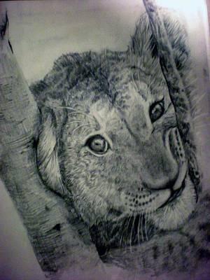 Rain Forest Animals Drawing - Lion by Siri Stensberg