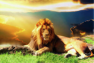 Photograph - Lion Sunset by Inspirational Photo Creations Audrey Taylor