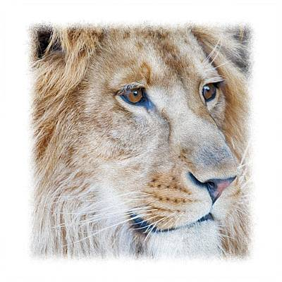 Photograph - Lion T-shirt V1 by Rospotte Photography