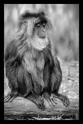Forest Photograph - Lion Tailed Macaque by LeeAnn McLaneGoetz McLaneGoetzStudioLLCcom