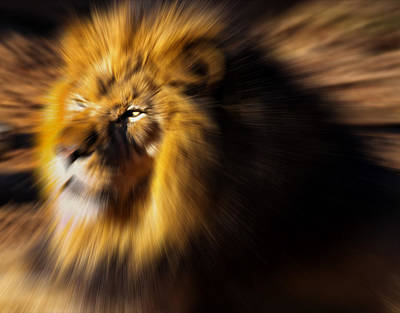 Digital Art - Lion The King Is Comming by Chris Flees
