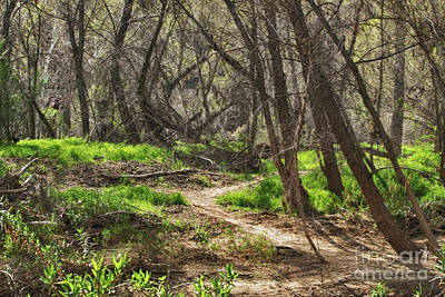 Photograph - Lion Trail At Hassayampa Nature Reserve by Anne Rodkin