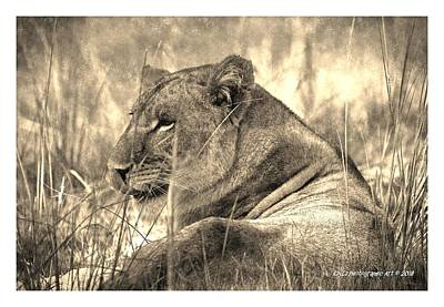 Digital Art - Lion Vintage Color by RayZa Photography