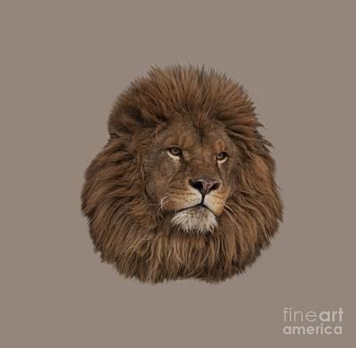 Lion Print by Wildlife Fine Art