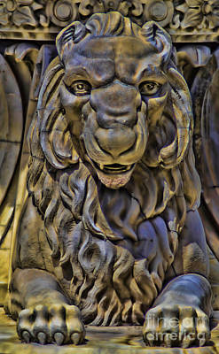 Photograph - Lion Without A Roar by Steven Parker