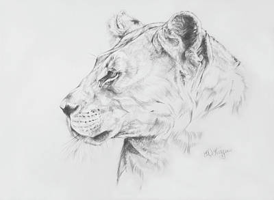 Line Drawing Lion Head : Tiger roaring drawing at getdrawings free for personal use