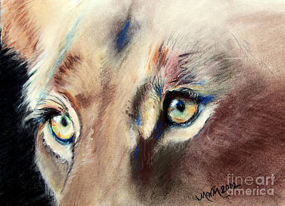 Drawing - Lioness Eyes by Michelle Wolff