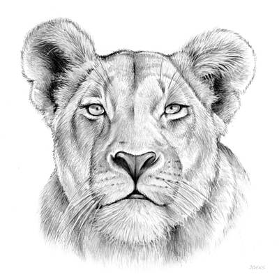 Lioness Drawing - Lioness by Greg Joens