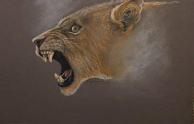 Drawing - Lioness by Kodjo Somana