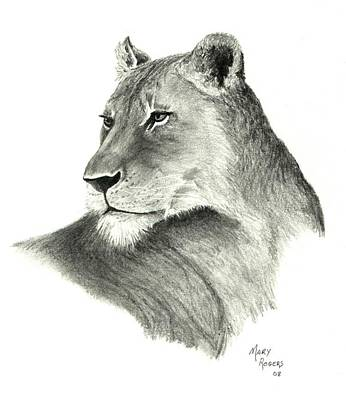 Drawing - Lioness by Mary Rogers