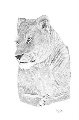 Drawing - Lioness by Patricia Hiltz