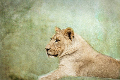 Photograph - Lioness Portrait II by Wade Brooks