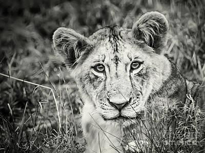 Photograph - Lioness Portrait by Robin Zygelman
