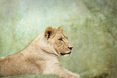 Photograph - Lioness Portrait by Wade Brooks