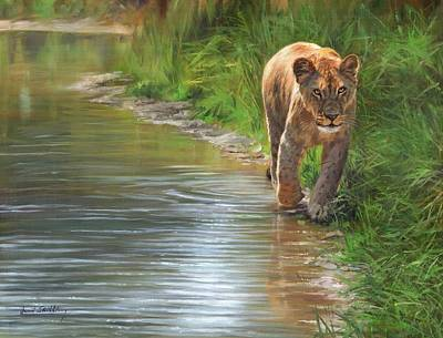 Painting - Lioness. Water's Edge by David Stribbling