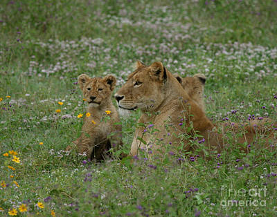 Lioness With Cubs Ngorongoro  Original by Joseph G Holland