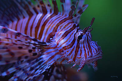 Photograph - Lionfish Close Up by Ken Figurski