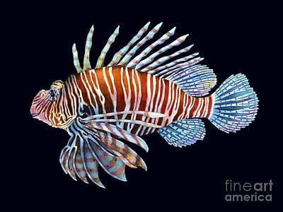 Lionfish Painting - Lionfish In Black by Hailey E Herrera